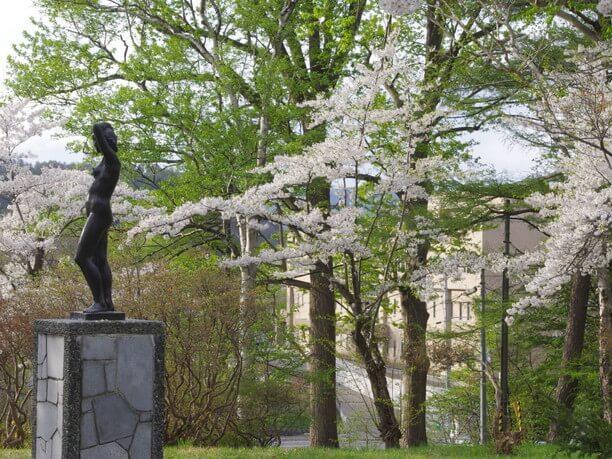 至る所で咲いている桜