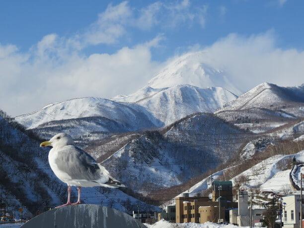 雪が積もった山々「