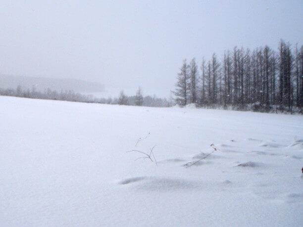 一面に広がるの雪景色