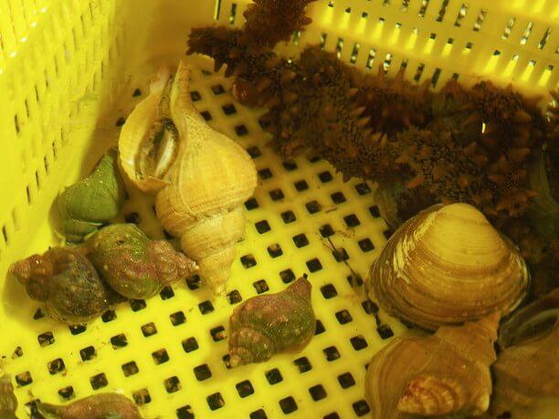 いけすの中の旬の魚介