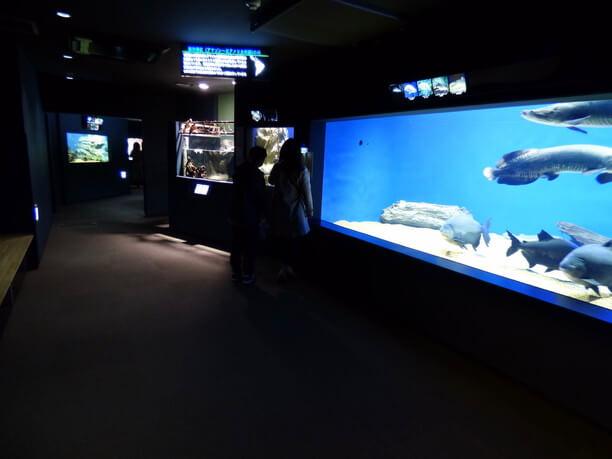 熱帯淡水魚ゾーン