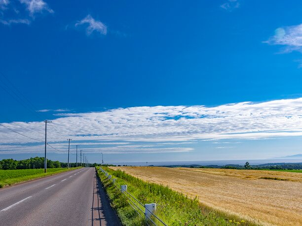 一直線の道と緑と小麦畑