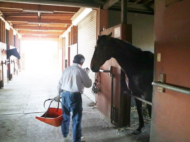 松井さんと馬