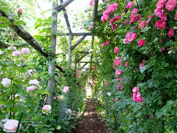 花の数と種類が豊富