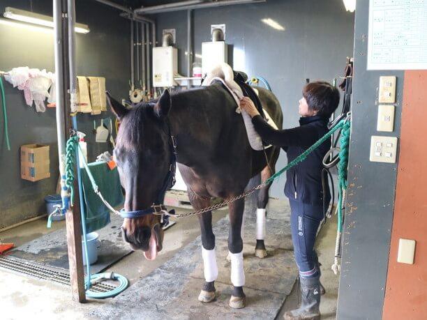 松井さんと馬2