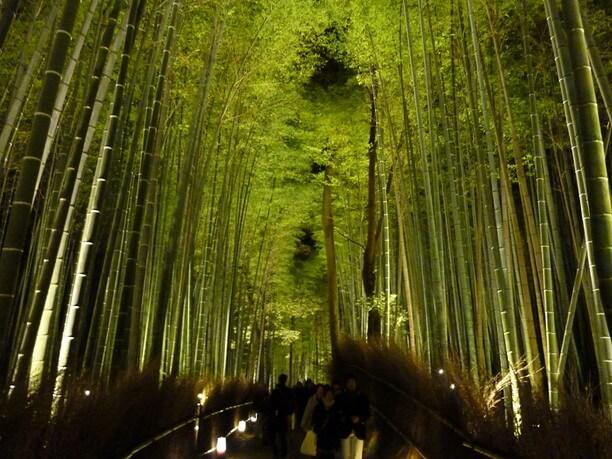 ライトアップされた嵯峨野竹林の道