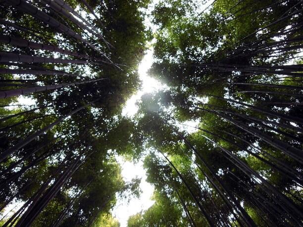 竹林から見上げた空