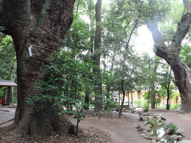 樹齢600~800年といわれるご神木