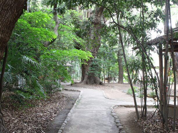 こじんまりとした森「生田の森」
