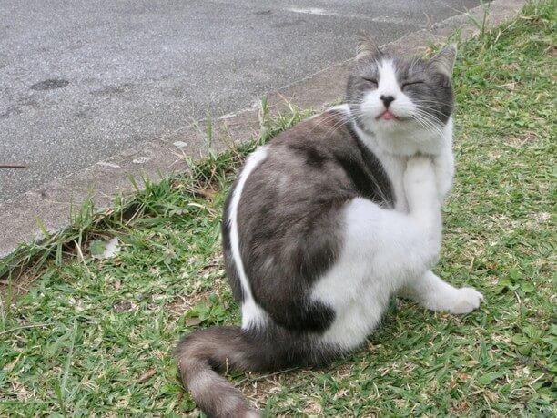 マスコット的な存在の猫