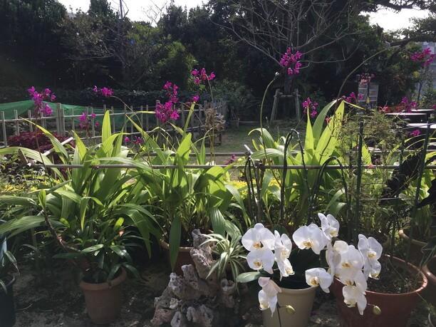 小さな植物園