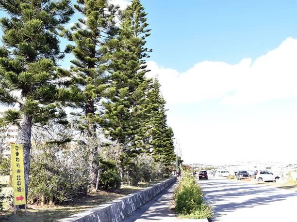 海沿いの並木道