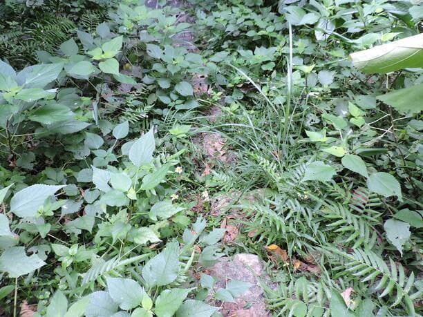 石段を覆い尽くす亜熱帯植物群達