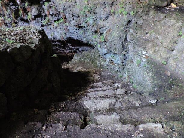 ゴツゴツとした鍾乳石の壁にもシダ類が根を下ろす