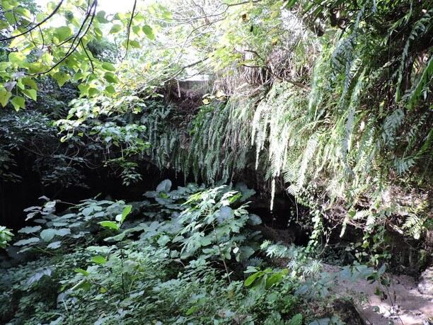 亜熱帯の緑がいっぱい