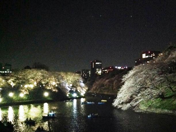千鳥ヶ淵の桜の夜間ライトアップ