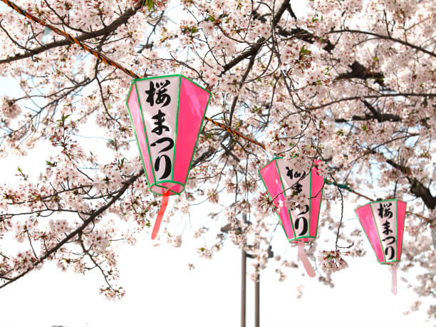 桜まつりの提灯と桜